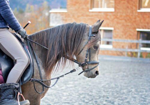 Pantalon Animo : le pantalon de cheval Animo